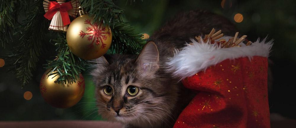 Weihnachtsbaum Test und Vergleich