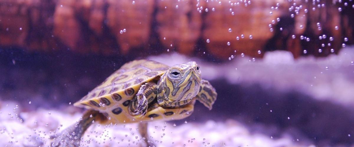 Aquarium zu Hause