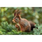 Eichhörnchenfutter Bestseller