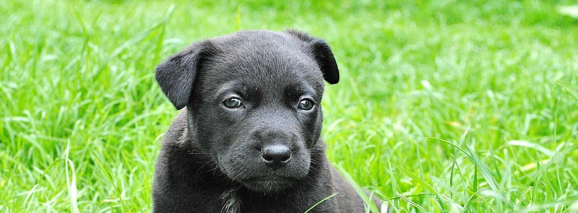 Erziehungshalsband / Antibellhalsband für Hundeerziehung