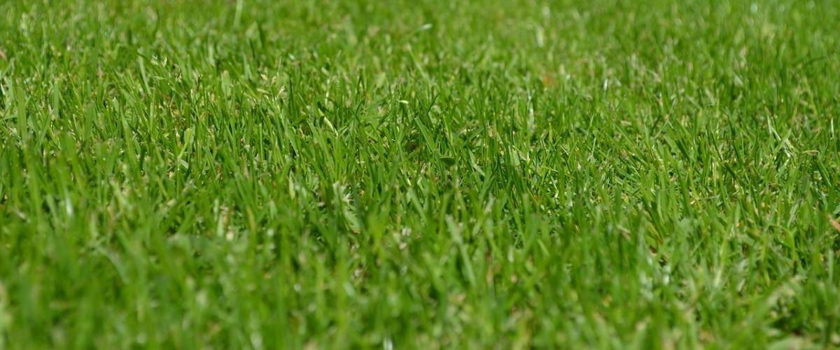 Gepflegter Rasen dank dem Rasenmäher