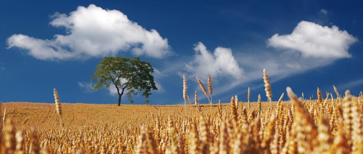 Getreidemühle