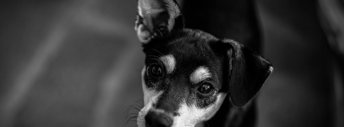 Hundetragebeutel