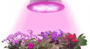 LED Pflanzenleuchte Bestseller