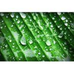 Chlorophyll Bestseller