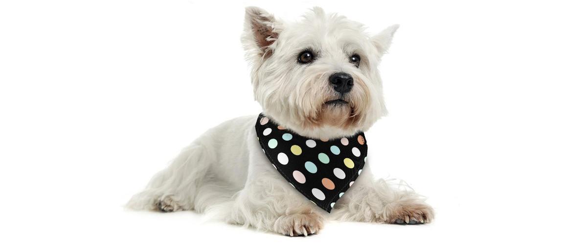 Halstuch für Hunde oder Katzen von Poppypet