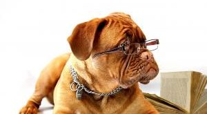 Hundepfeife Bestseller