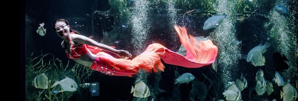 Meerjungfrau-Flosse