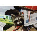 Mülltonnenbox Bestseller