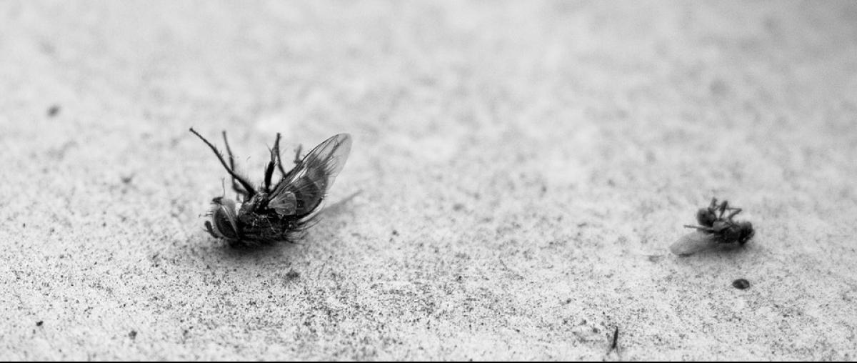 Tote Fliegen