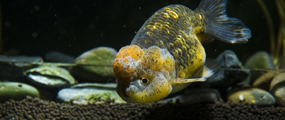 Aquarium Kies
