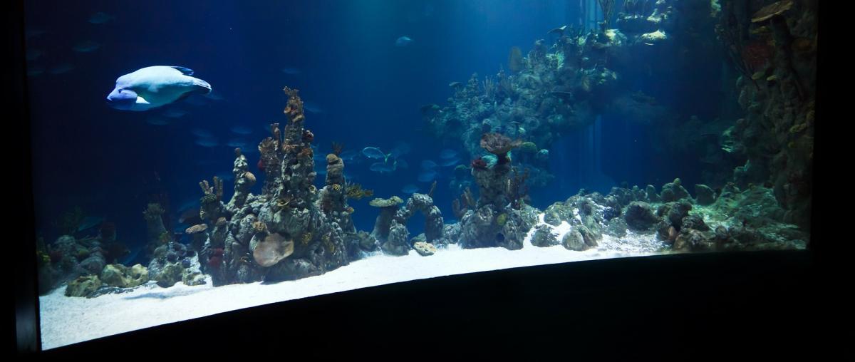 Größeres Aquarium mit Fisch und Dekorationsobjekten