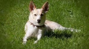 Hunde Sicherheitshalsband Bestseller