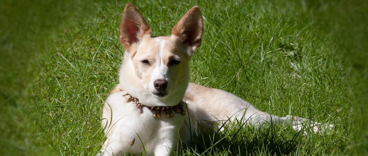 Hunde Sicherheitshalsband Tipps und Vergleich