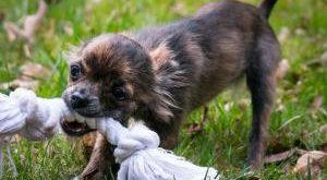 Hunde Spielseil Bestseller