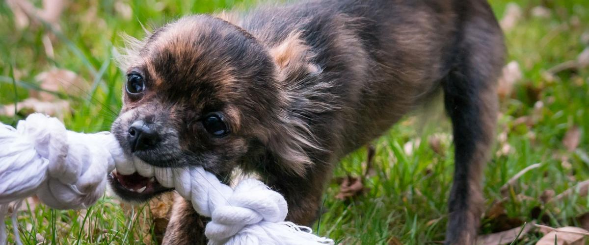 Hunde Spielseil Vergleich und Tipps