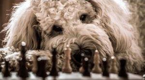 Hunde Strategiespiel Bestseller