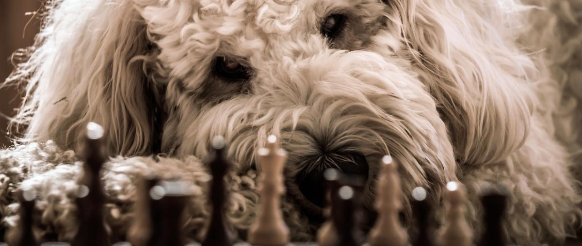 Hunde Strategiespiel Tipps und Vergleich