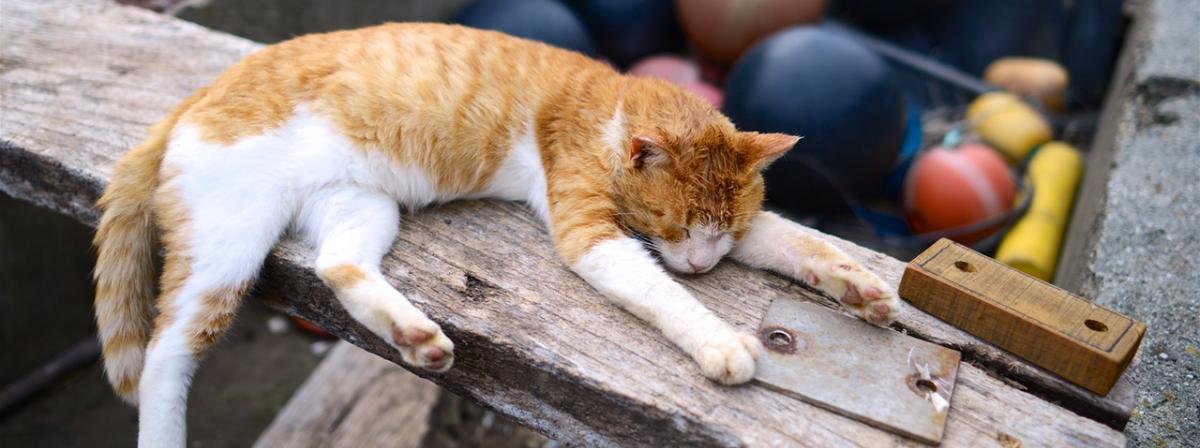 Katzenleine Tipps und Vergleich