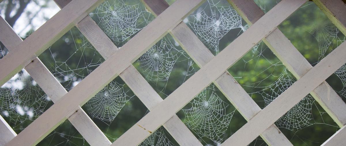Mehrere Spinnennetze auf einem Balkon