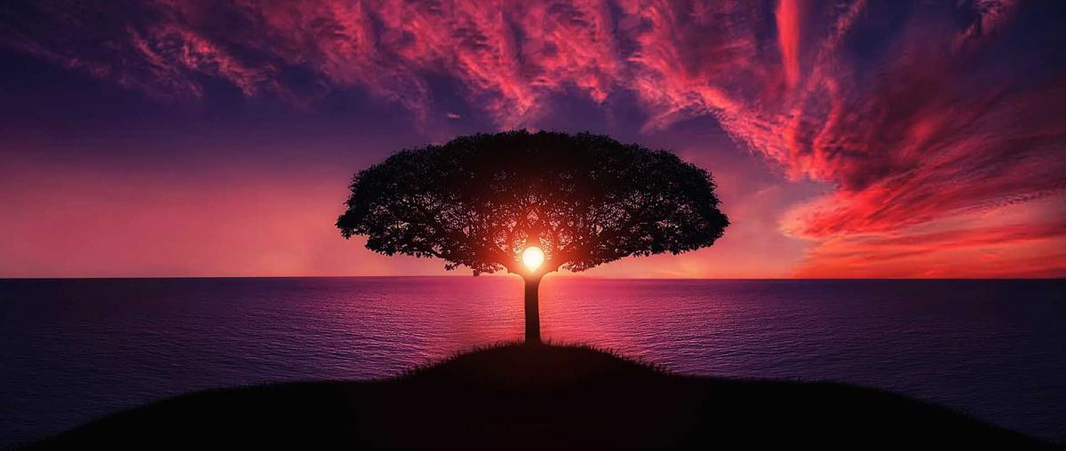 Foto eines Baums mit Sonnenuntergang im Hintergrund