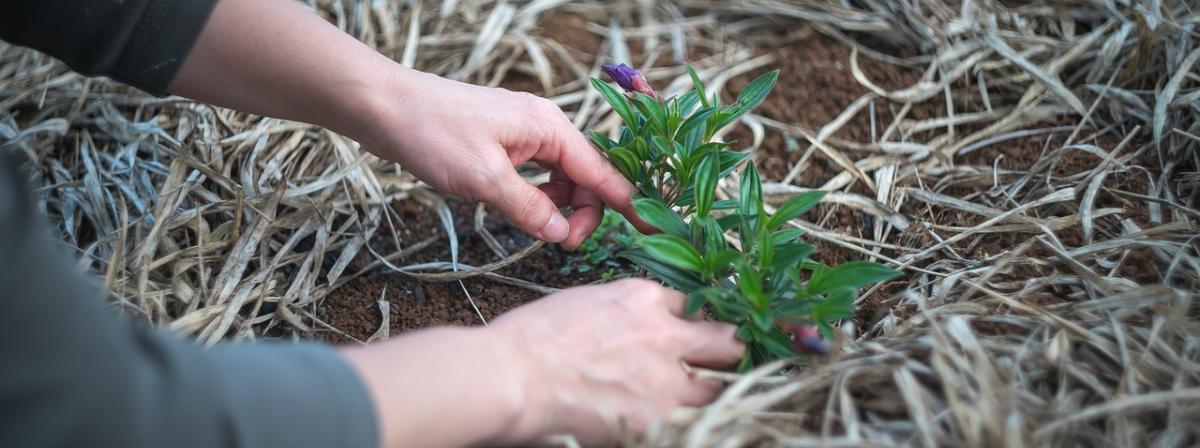 Gartenmesser Vergleich und Tipps