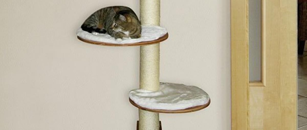 Katzen Kratzsäule