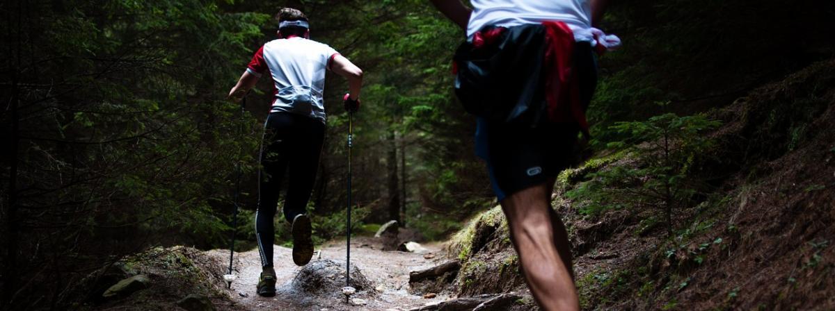 Langlaufstöcke Tipps und Vergleich
