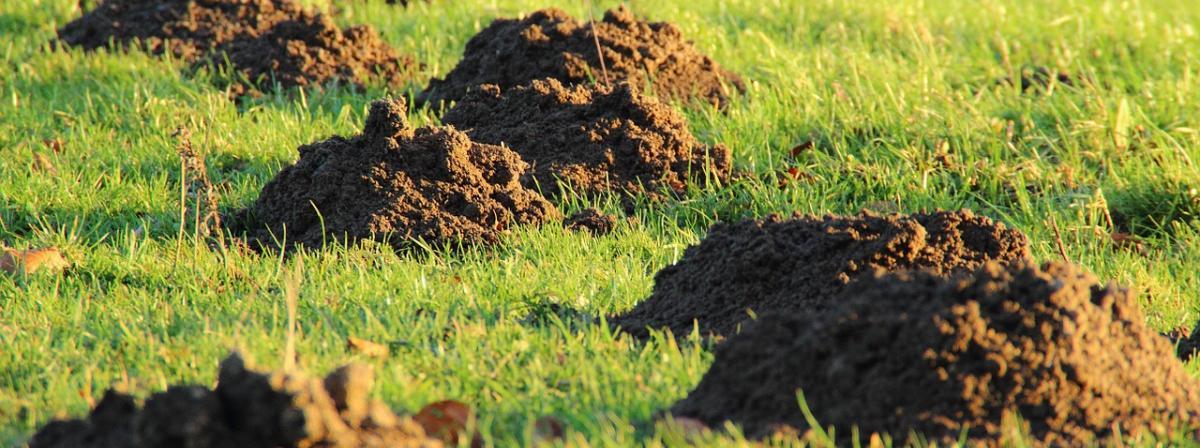 Bodentester Vergleich und Tipps