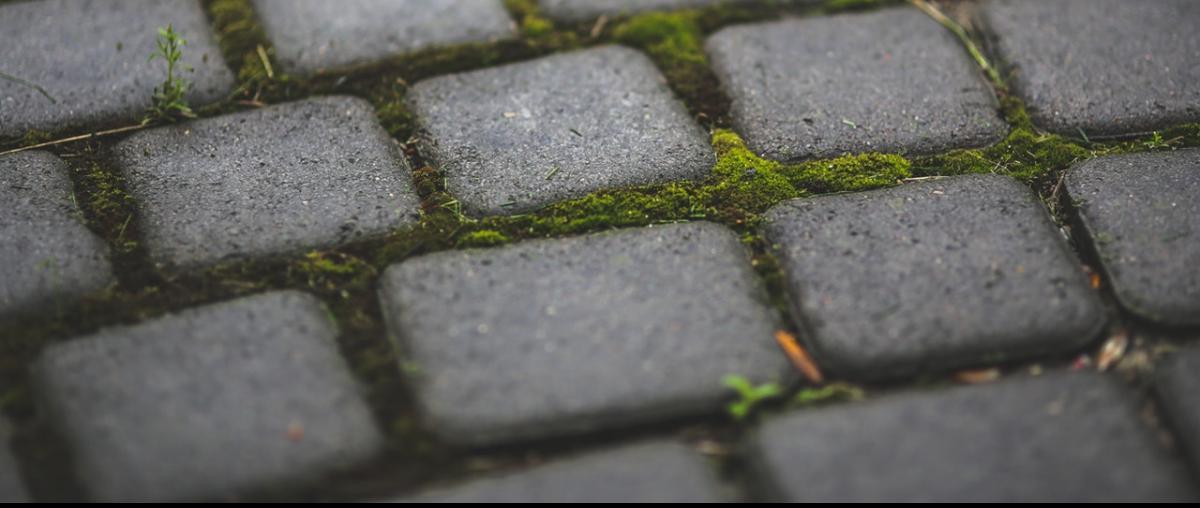 Moos auf Pflastersteinen in einer Terrasse