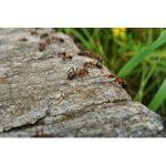 Ameisenabwehr Bestseller