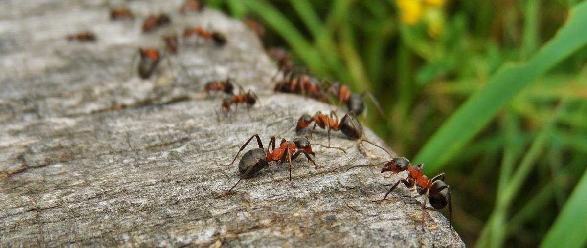 Ameisenabwehr