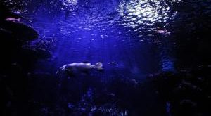 Aquarien Sicherheitsunterlage Bestseller