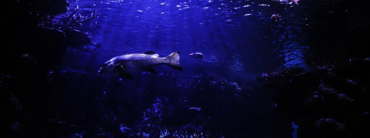 Aquarien Sicherheitsunterlage Ratgeber