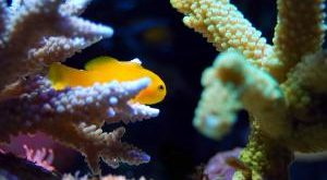 Aquarium Futterautomat Bestseller