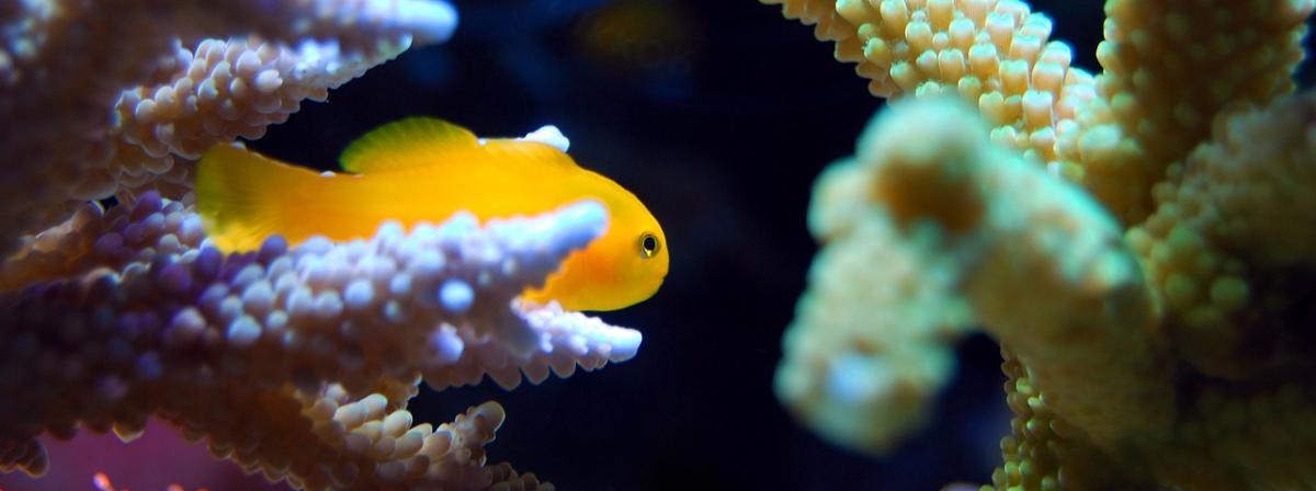 Aquarium Futterautomat Ratgeber