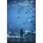 Aquarium Scheibenreiniger Bestseller