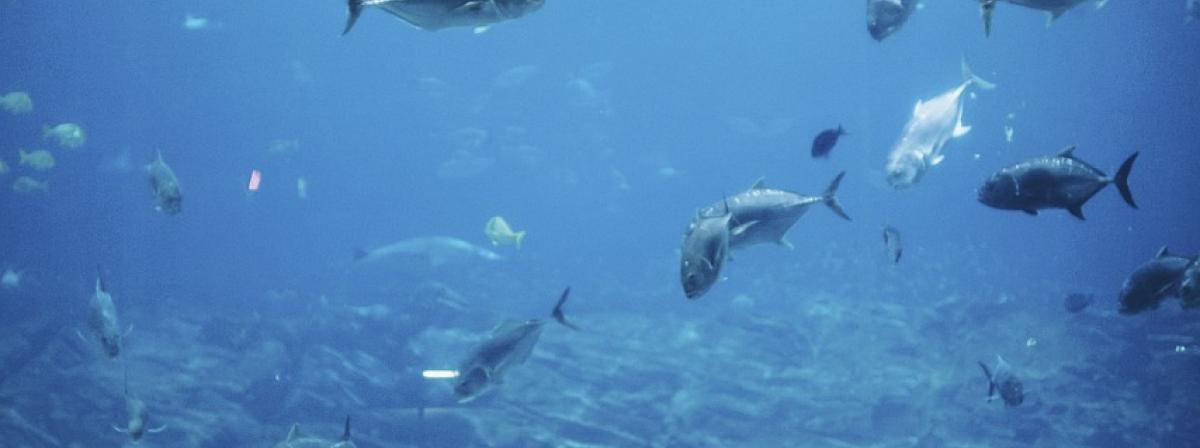 Aquarium Scheibenreiniger Tipps