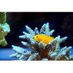 Aquarium Thermometer Bestseller