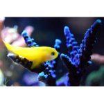Aquarium Wassertest Bestseller