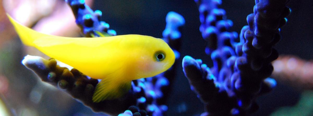 Aquarium Wassertest Tipps