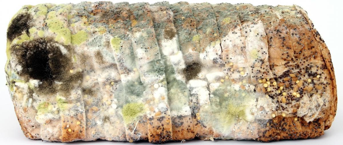 Verschimmeltes und altes Laib Brot, das nicht mehr gegessen werden sollte