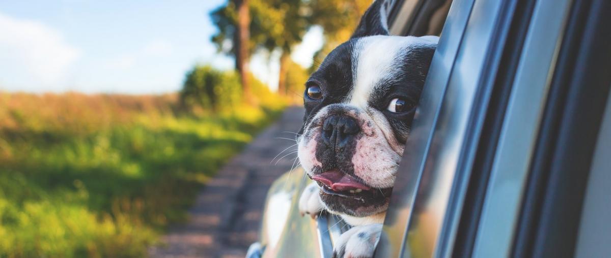Hunde-Autoschondecke sei Dank!