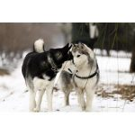 Hunde Doppelleine Bestseller