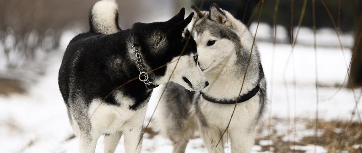 Hunde-Doppelleine für die Liebsten!