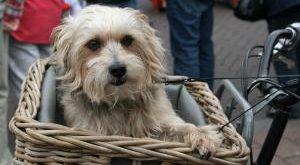 Hunde Fahrradkorb Bestseller