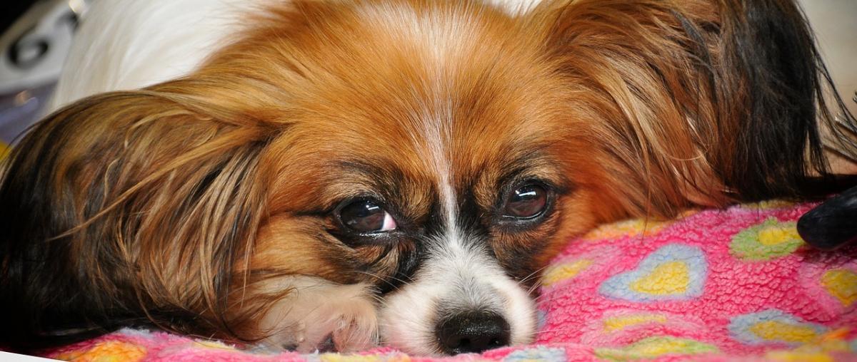 Hundebuggy - Der Buggy für Ihren Hund!