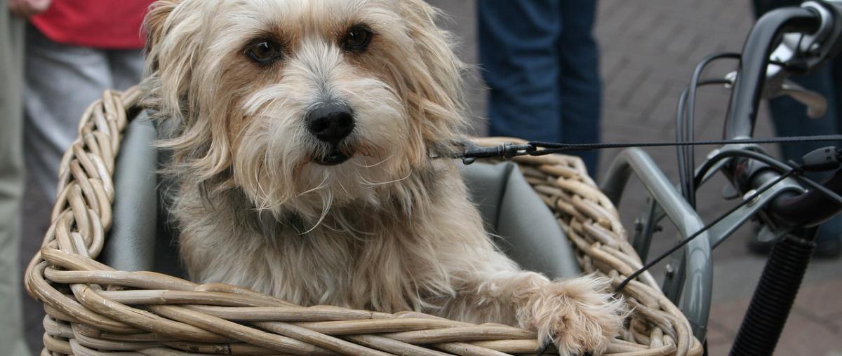 Hundefahrradkorb am Fahrrad