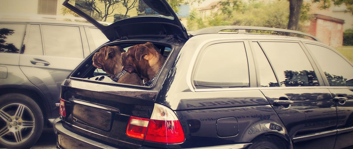 Auto-Hundegitter für Ihr Fahrzeug!