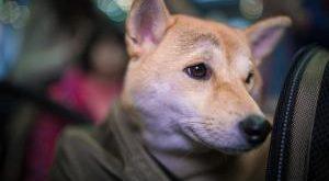Hunde-Rucksack Bestseller